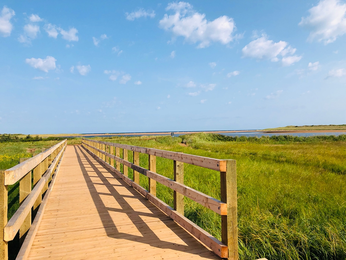 Blackbush-boardwalk-to-the-beach---gallery