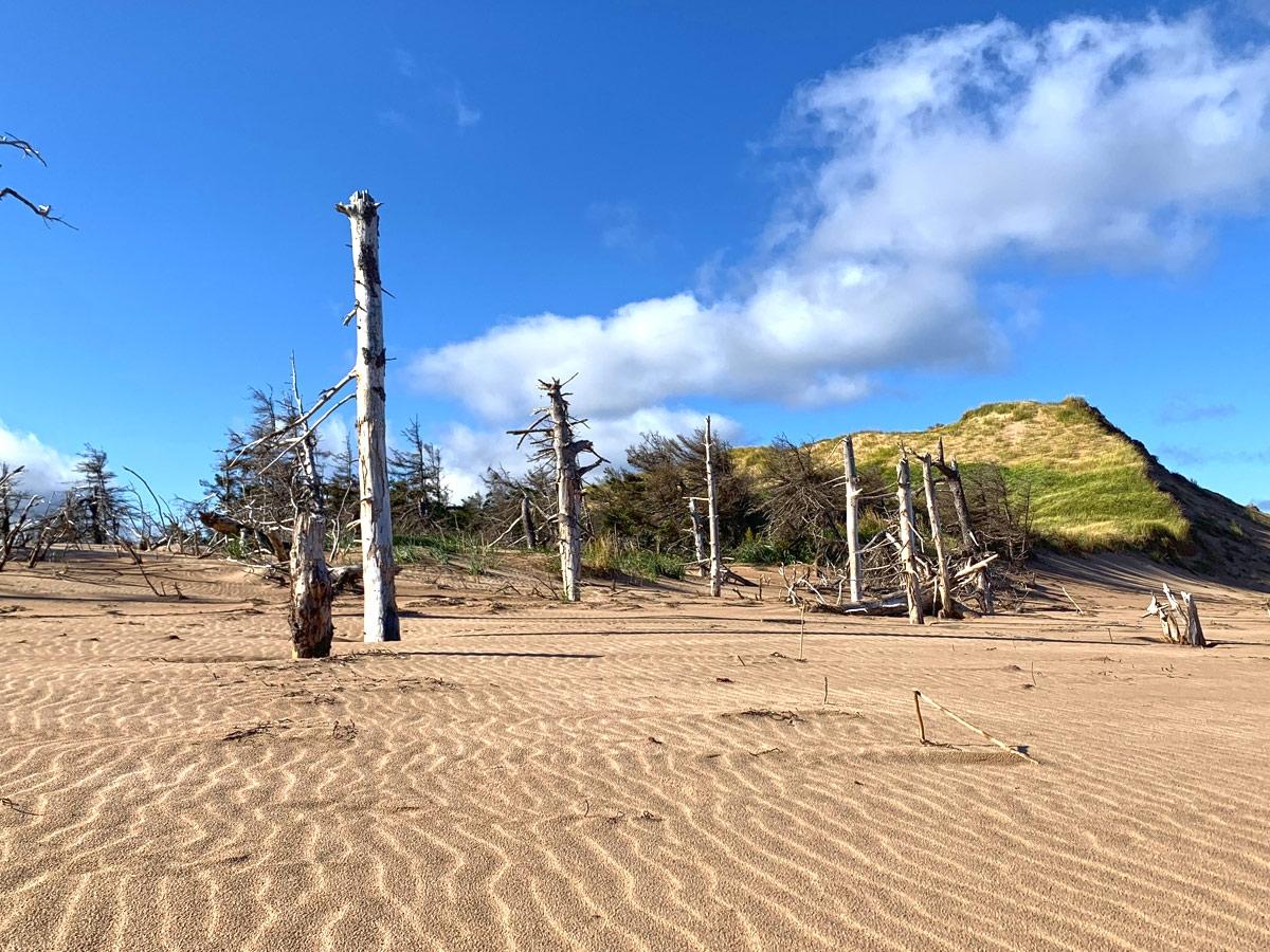 Blackbush-dune-trees