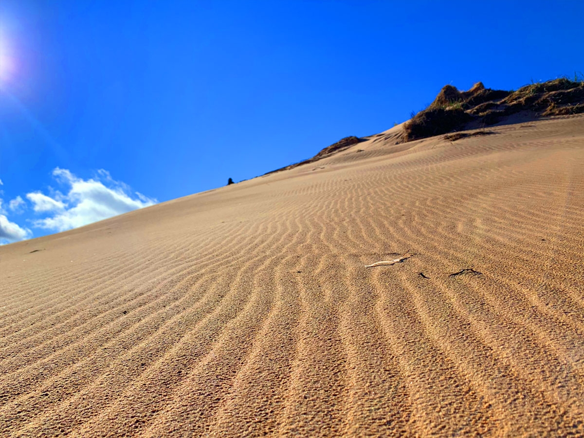 Blackbush-grand-dune