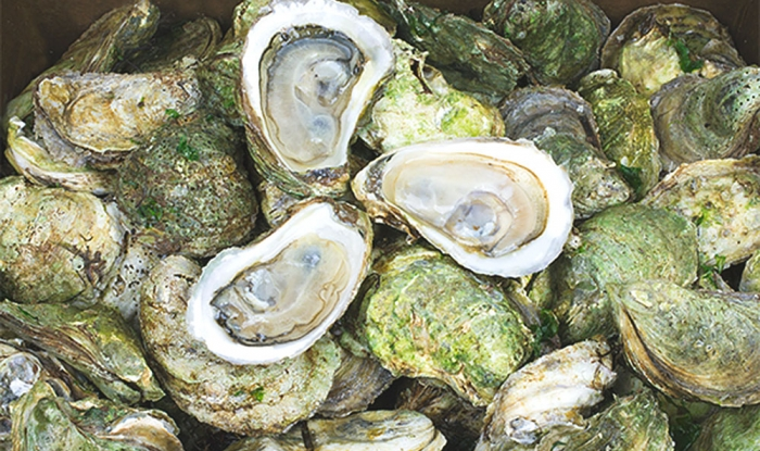 Oyster-PEI