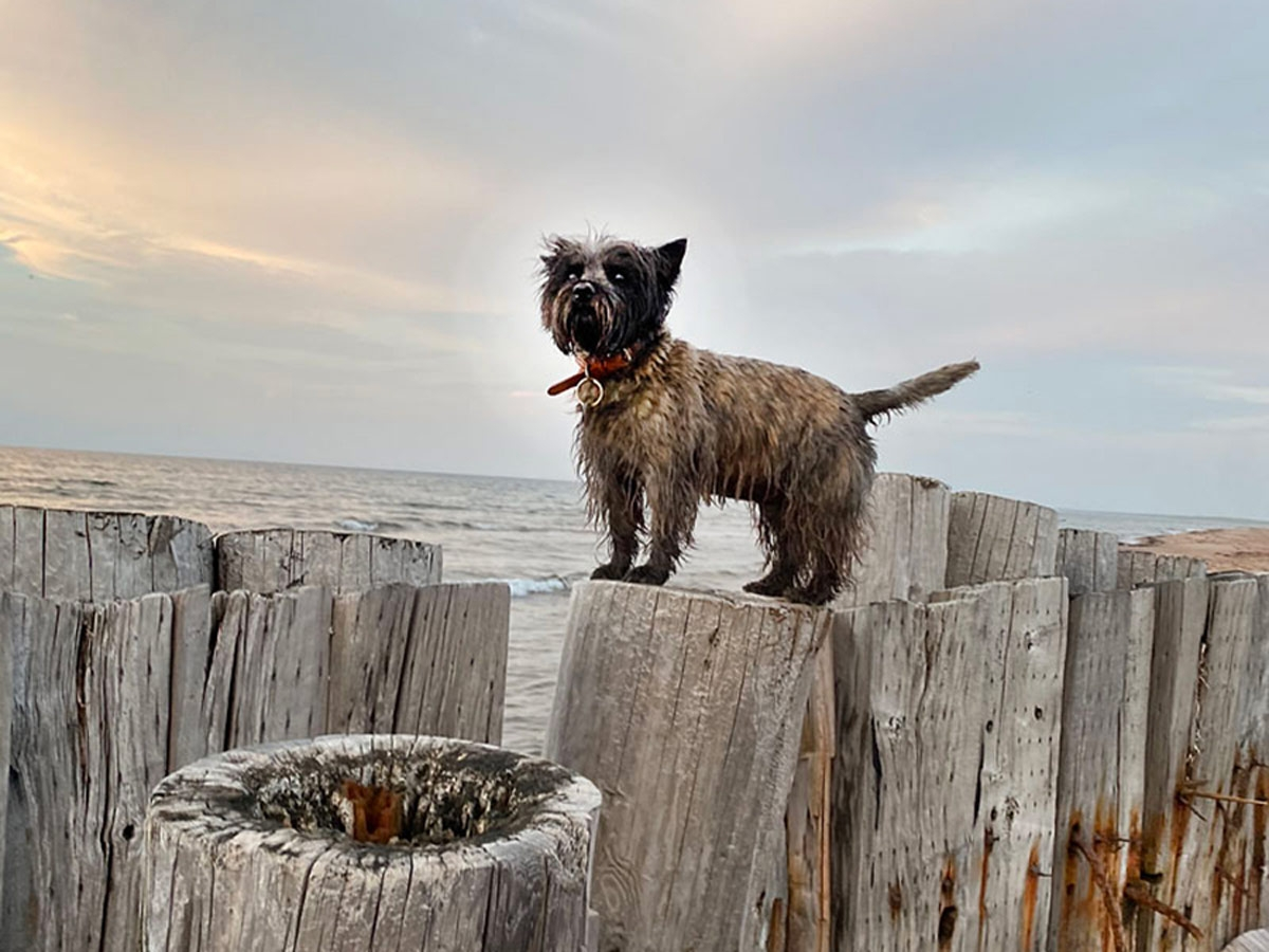 dog-posts