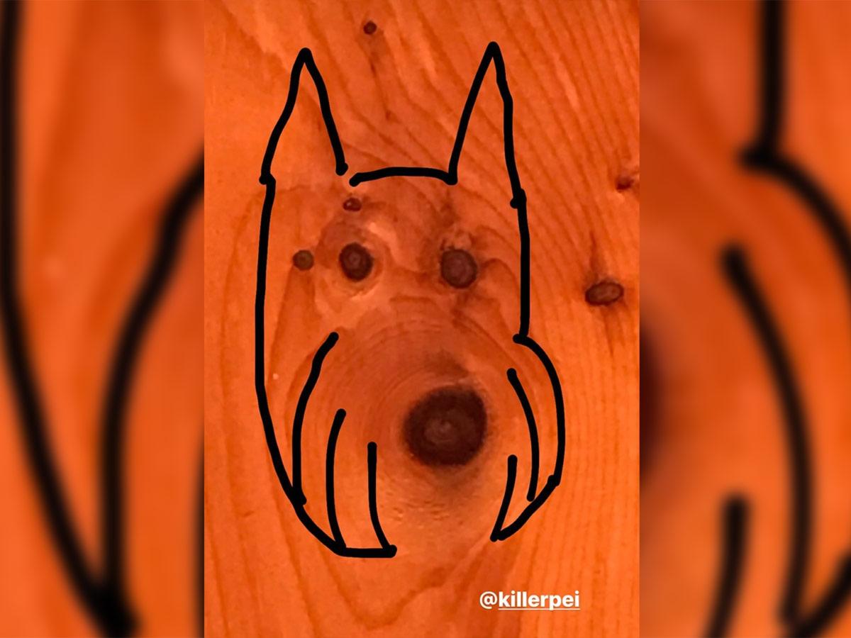 dog-wood