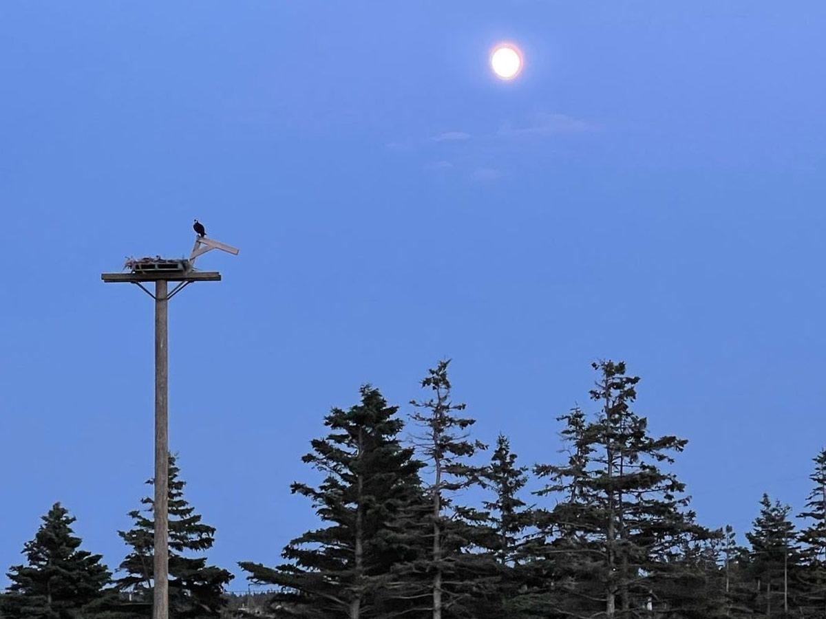 osprey-night-moon